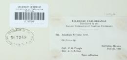 Image of Aecidium pereziae