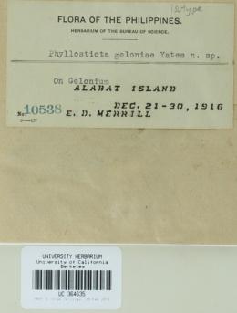 Image of Phyllosticta gelonii