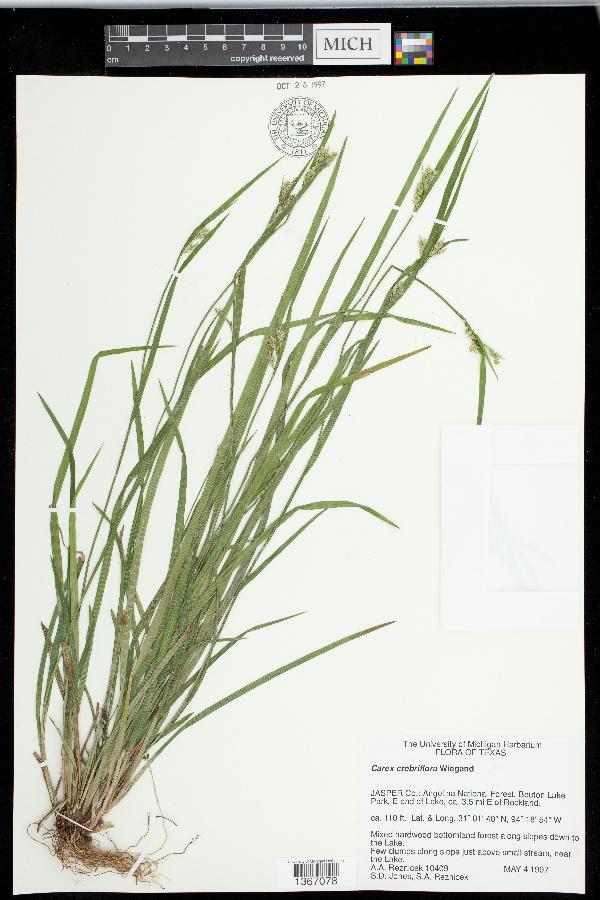 Carex crebriflora image
