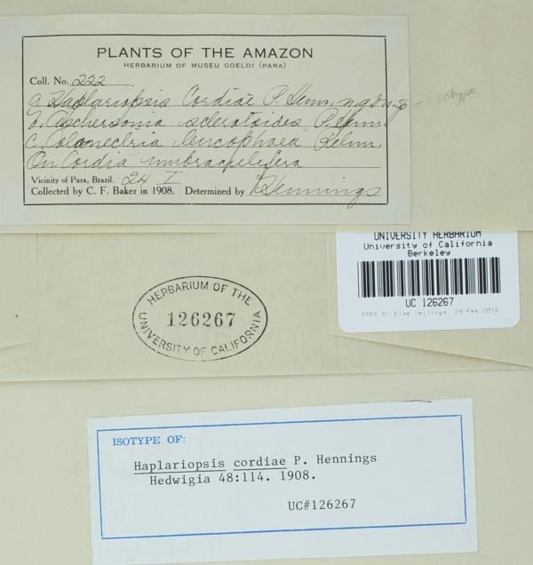 Haplariopsis cordiae image