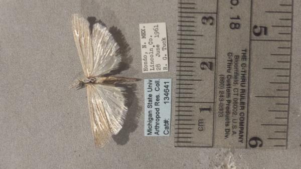Eufernaldia cadarellus image