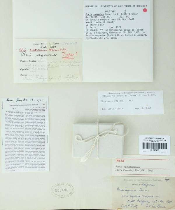 Poria sequoiae image