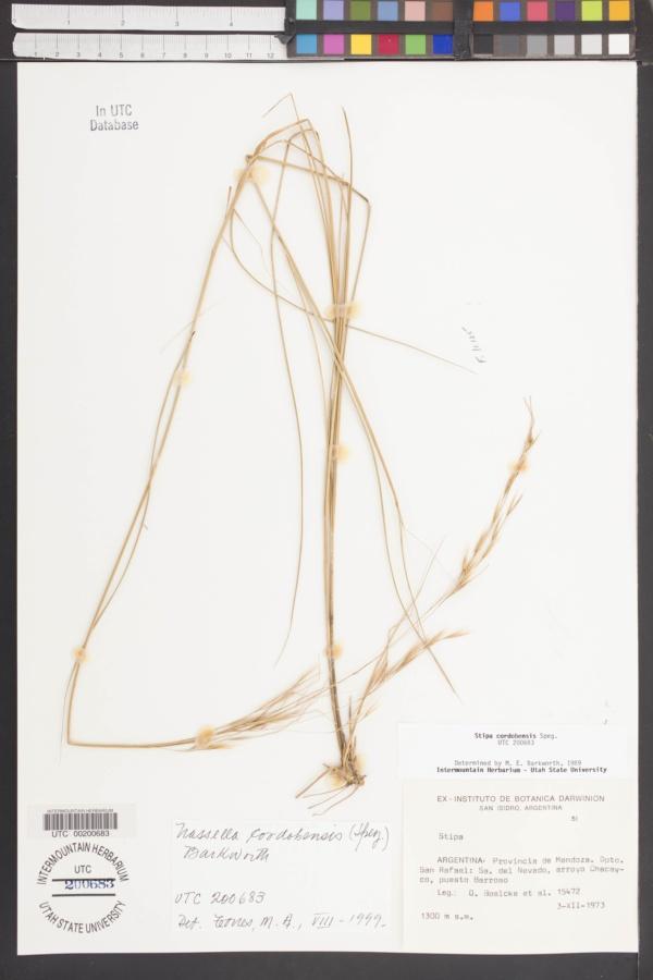Nassella cordobensis image