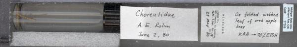 Choreutidae image
