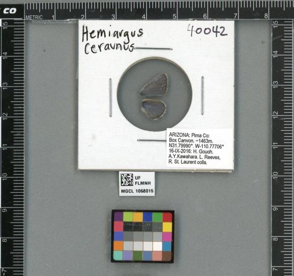Lycaenidae image