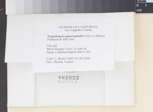 Trapeliopsis glaucopholis image
