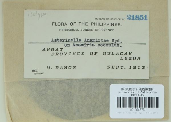 Asterinella anamirtae image