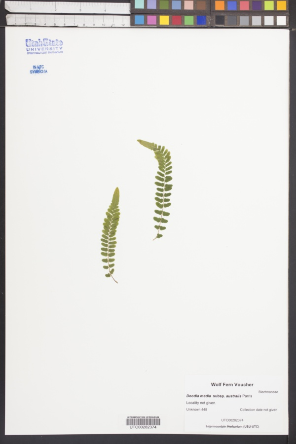 Doodia australis image