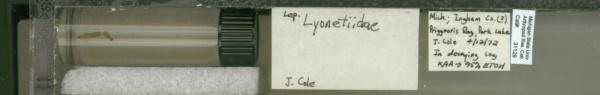 Lyonetiidae image